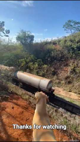 Train D045 and the railfan dogs (Brazil)